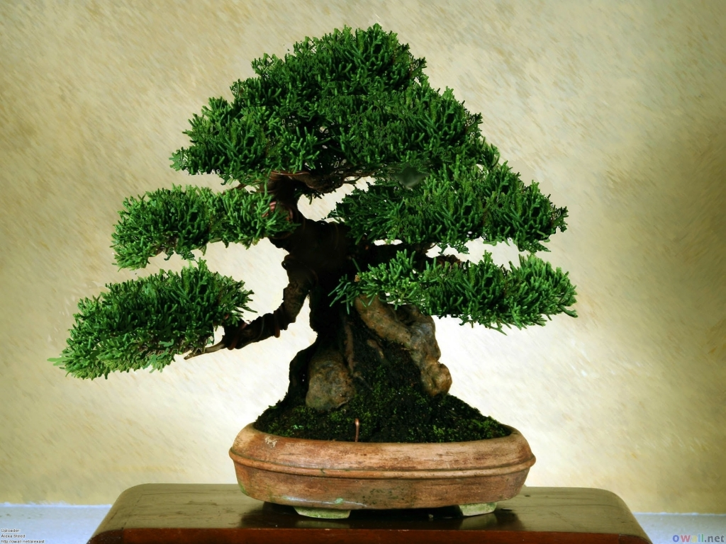 Bonsai_Wallpapers-4(www.CoolWallpapers.org).jpg