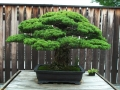 Bonsai_Wallpapers-2.jpeg