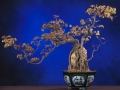 Bonsai_Wallpapers_Trident_Maple(www.CoolWallpapers.org).jpg